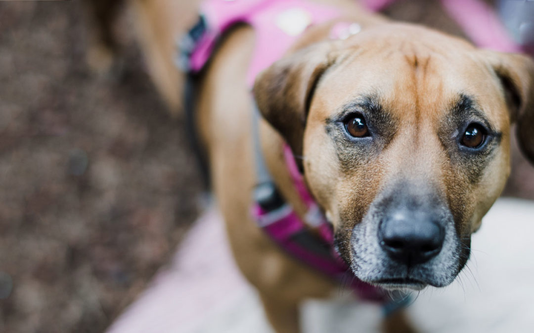 The Muddy Language of Dog Behavior Titles