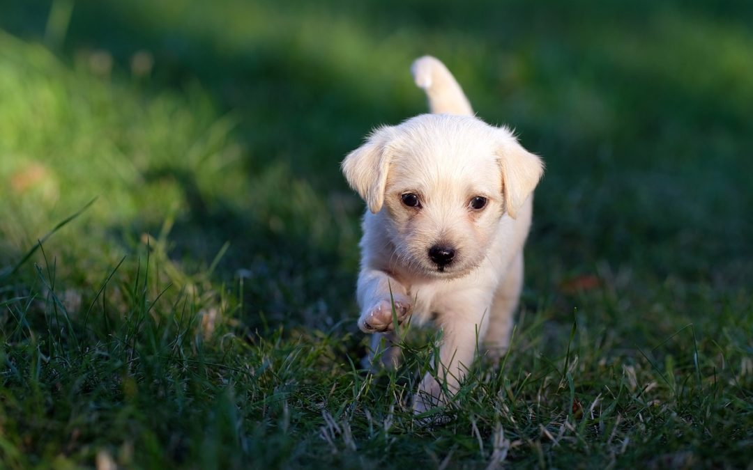 Yes, Your Puppy Can Go Out Before All Their Vaccines