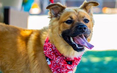 Decompression: 9 Ways To Help Your New Rescue Dog Adjust To A New Life