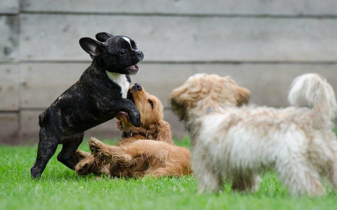 Puppy Play – It's Not Just For Fun