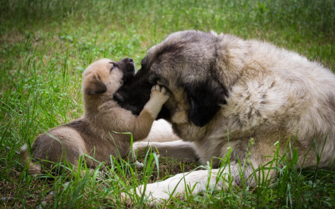 Fear In Dogs: Maternal Stress and Behavior
