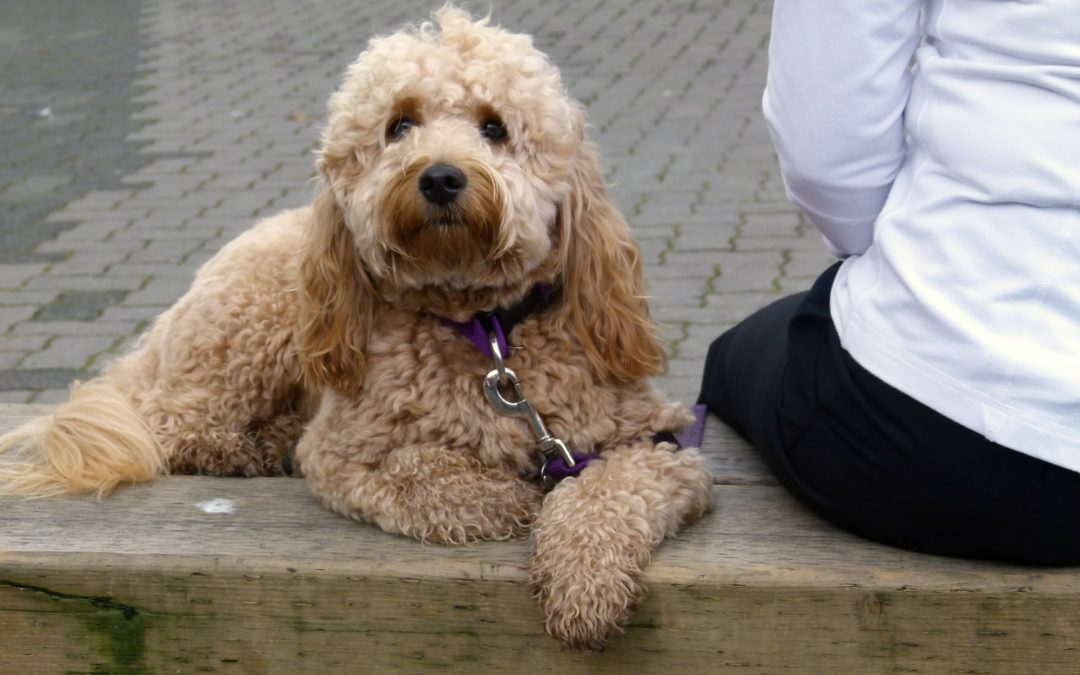 Fear in Dogs: Lack of Socialization