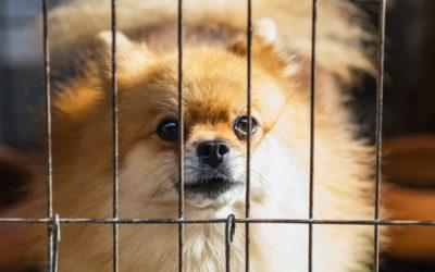 Fear in Dogs: Genetics