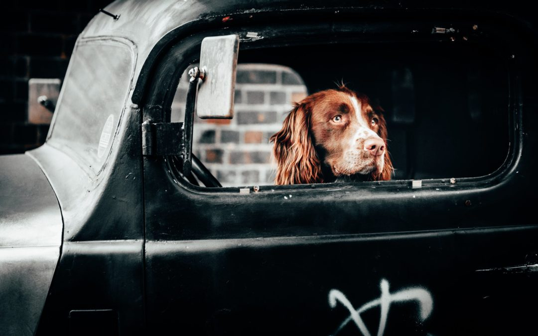 8 Tips For Keeping Dogs Safe In The Car