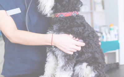 But, He's Fine At The Vet – Understanding Learned Helplessness
