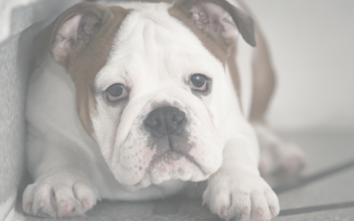 5 Mistakes You're Making With Your Fearful Dog