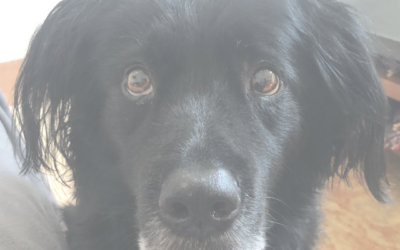 Living With and Loving Senior Dogs