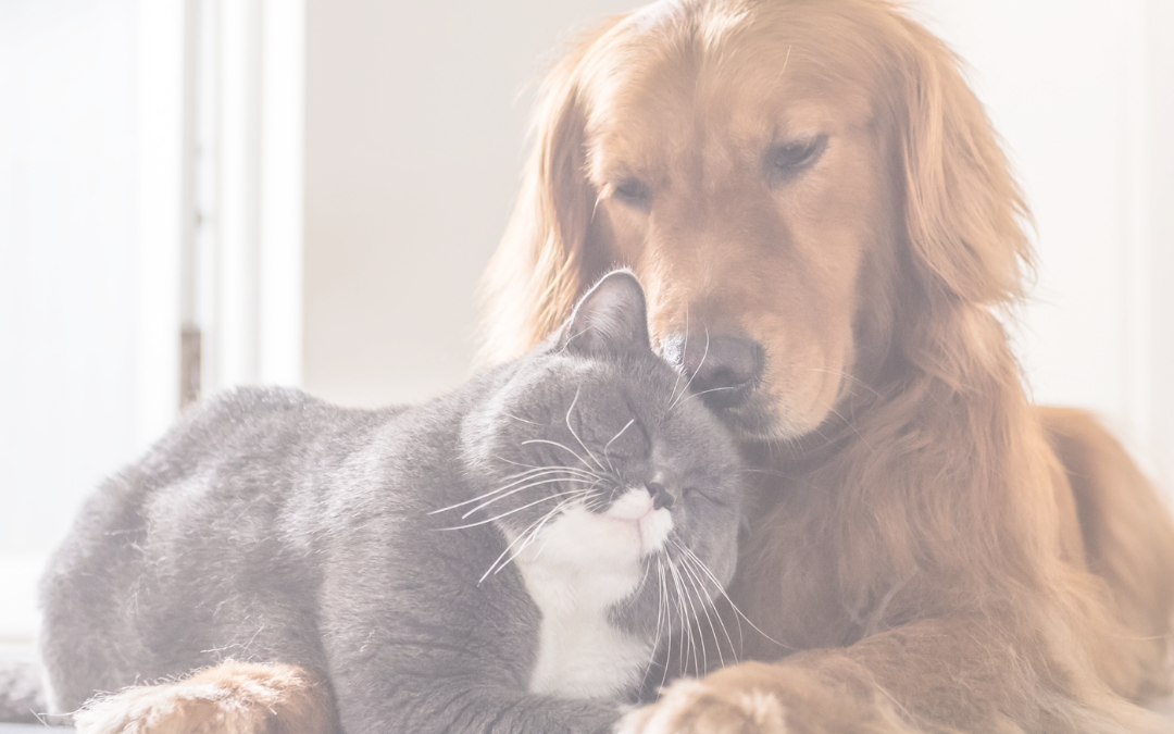 Introducing Dogs and Cats