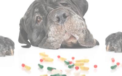 Behavioral Medication In Training